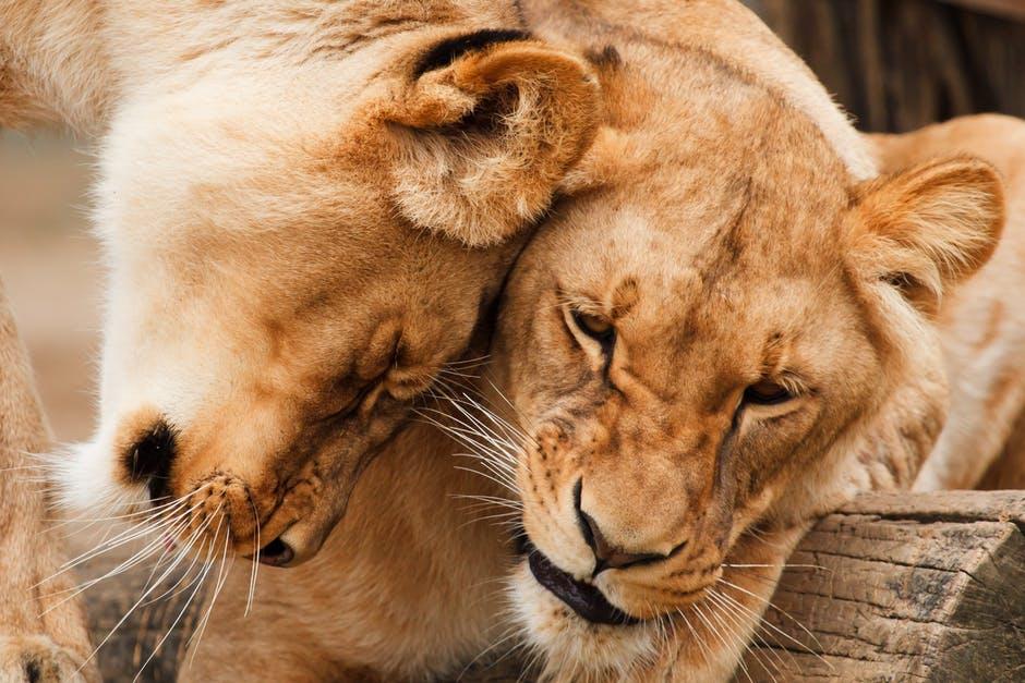 Odgovornost do živali